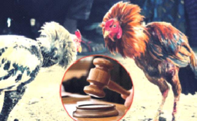 Police Nigha On Cock Fights - Sakshi