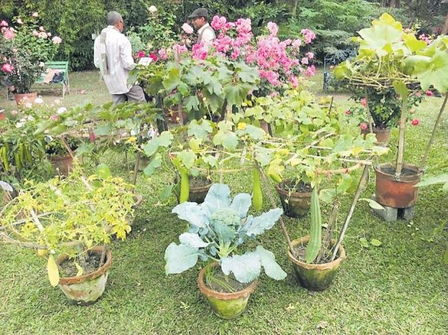 Awards wins for canopy vegetable crops - Sakshi