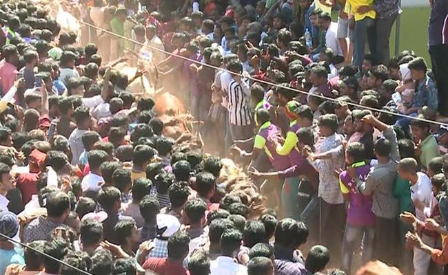 Jallikattu Celebrations in Rangampeta - Sakshi