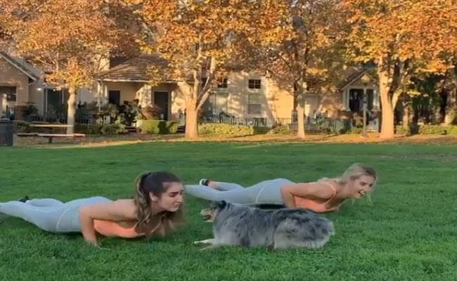 Australian Dog Doing Exercises Viral Video - Sakshi