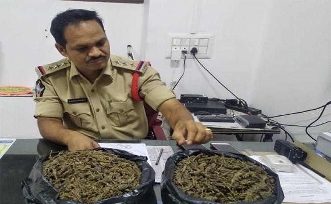 Marijuana Smuggling in Kurnool - Sakshi