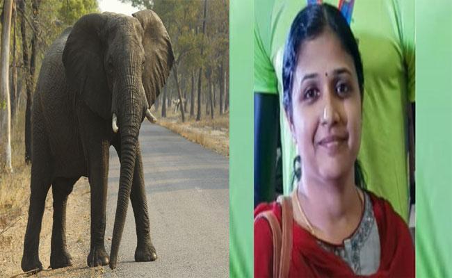 Lone Tusker Kills A Women In Palamalai Forest - Sakshi