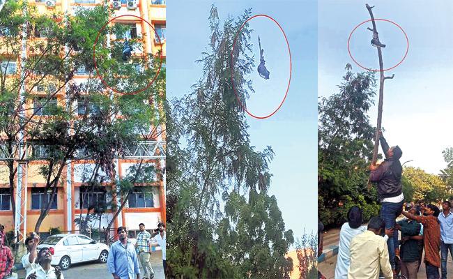 Gandhi Hospital Staff Saved Strucked Pigeon From China Manja - Sakshi