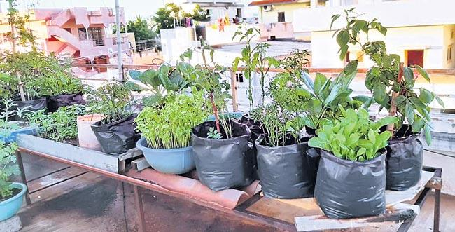 Prepare Organic Manure at Home crops - Sakshi