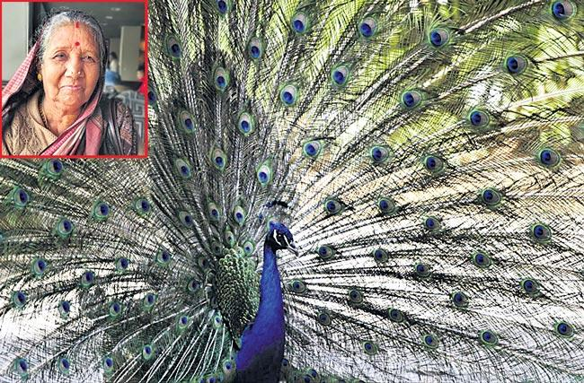 Odisha village woman journey from protecting peacocks - Sakshi