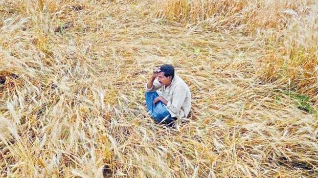 Devinder Sharma Article on Agriculture Income - Sakshi