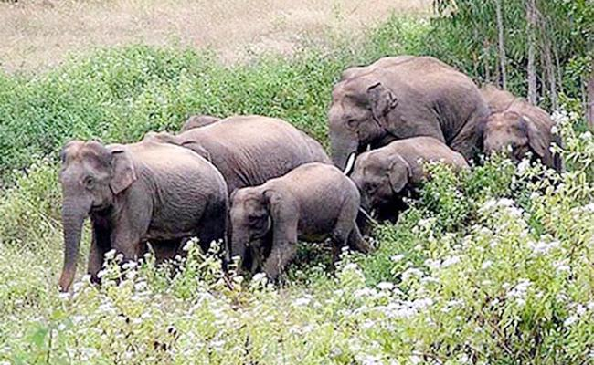 Elephants Attacks in Srikakulam - Sakshi