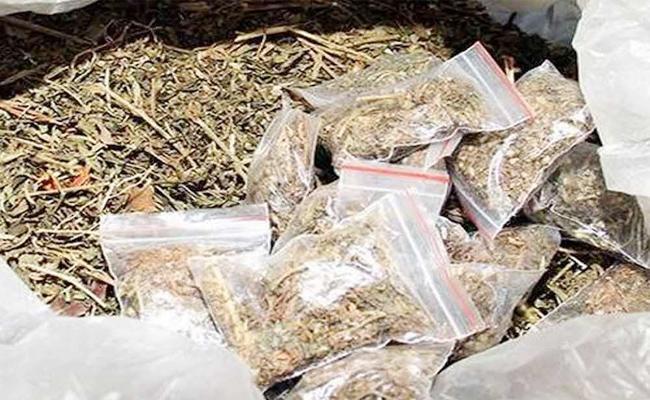 Marijuana Gowdowns in Vijayawada - Sakshi