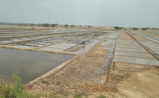 Salt Farmers Preparing Salt Fields In Nellore District - Sakshi