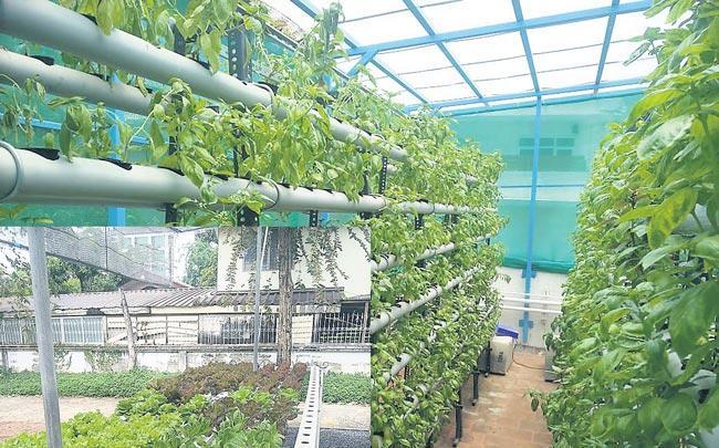 Rahul Dhoka of hydroponics farming - Sakshi