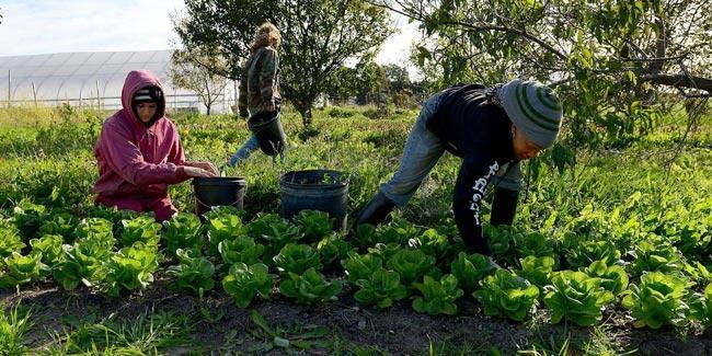 Training on Organic Vegetable Farming on the 16th - Sakshi
