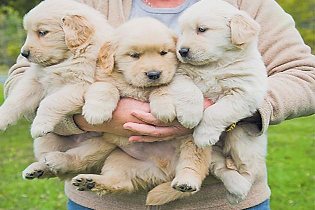 Special Act For Dog Babies in Western Australia - Sakshi
