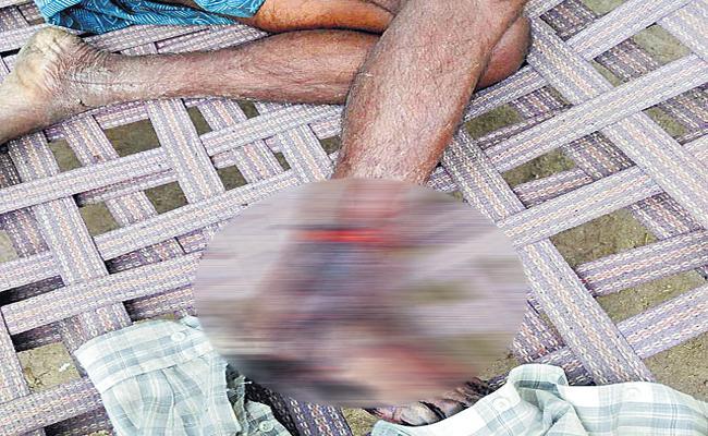 Tiger Attack On Shepherd - Sakshi