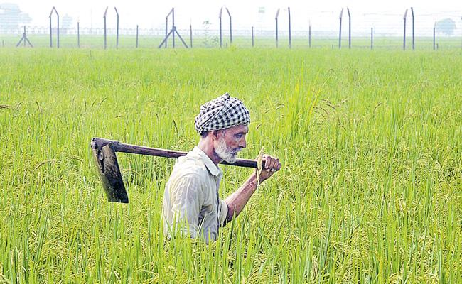 Central Government Neglect Agriculture Sector - Sakshi
