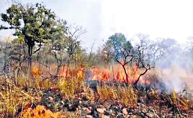 Cooking and fire bans in Nallamala Forest - Sakshi