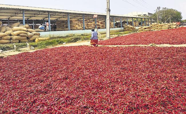 Farmers who suffer with the false propaganda of the Mirchi merchants - Sakshi