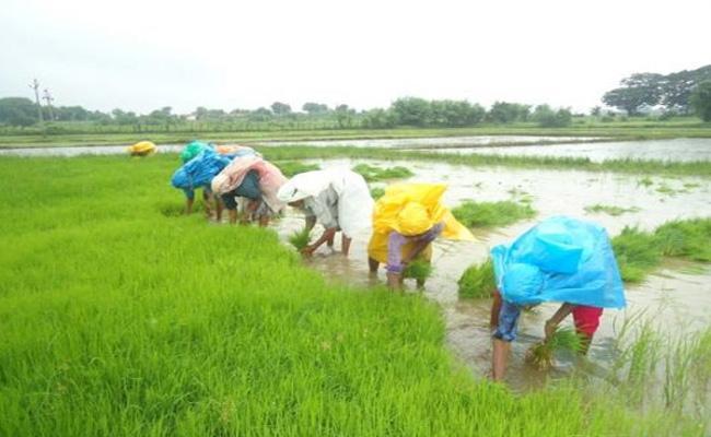 Solipeta Ramalinga Reddy Article On Farm Issues In Telangana - Sakshi