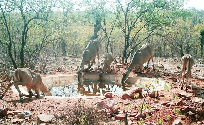 Animals Suffering With Water Shortage in Amrabad Tiger Forest - Sakshi