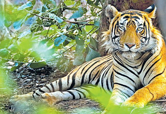 Wildlife Department Approved For National Highways And New Railway - Sakshi
