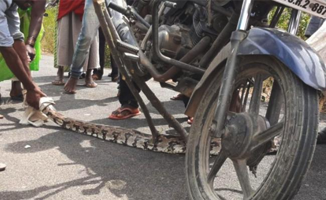 Python Snake in Two Wheeler Karnataka - Sakshi