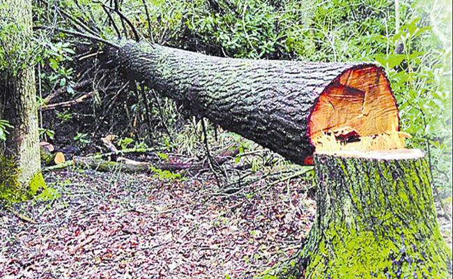 Forest Department has been fined for hitting trees - Sakshi
