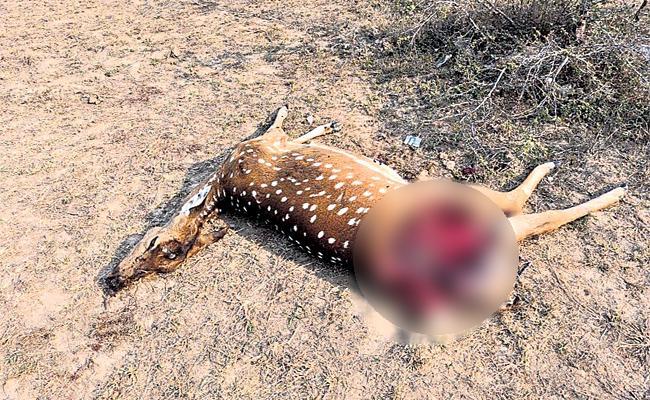 Deer Died in Dog Attacks HCU Hyderabad - Sakshi