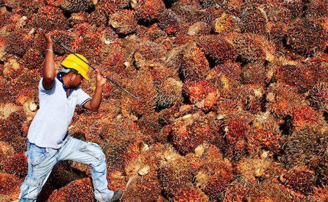 Malaysia Says Will Resolve Problems With India Over Palm Oil - Sakshi