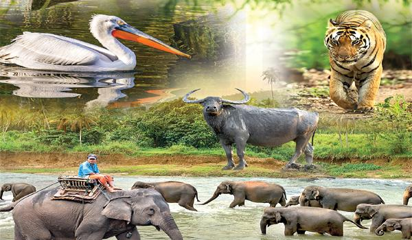 Special Story On World Wildlife Day On March 3rd - Sakshi