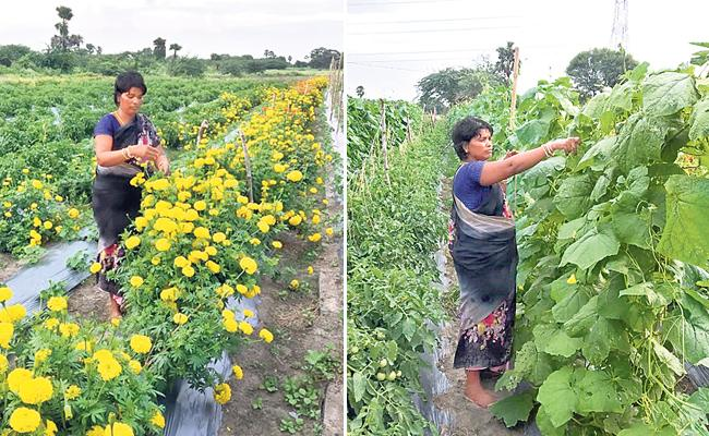 Eswaramma's Organic Cultivation In Multiple Cropping Systems - Sakshi