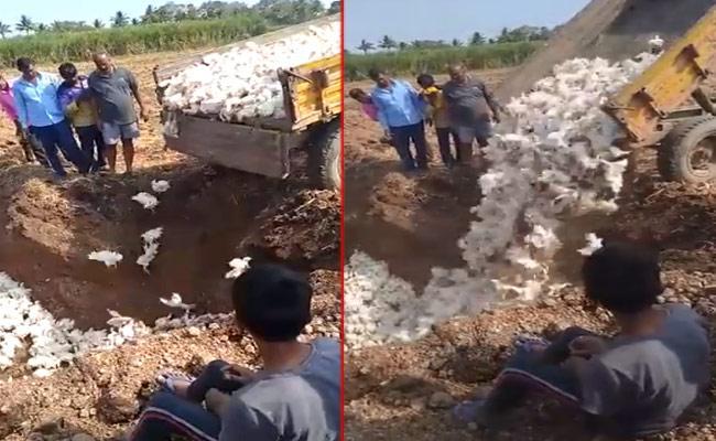 Coronavirus Effect : Karnataka Poultry Farmer Buries Chickens Alive - Sakshi