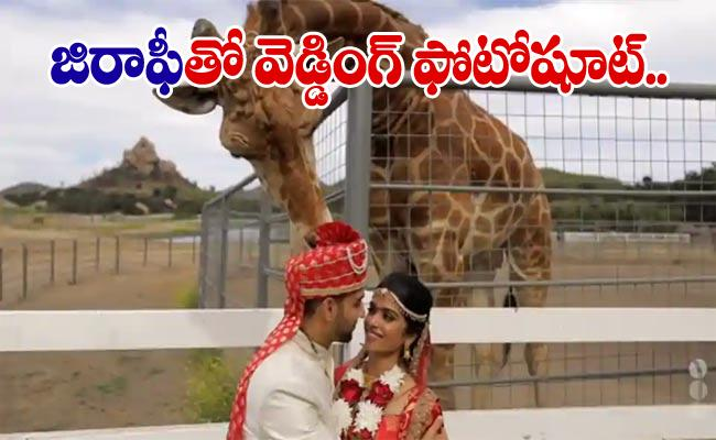 Giraffe Photobombs Couples Wedding PhotoShoot In California - Sakshi