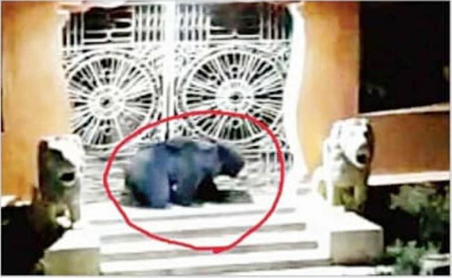 Bear Caught in Puri Jagannath Temple Odisha - Sakshi