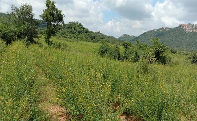 Three Acres Land Distribution Scheme Delayed in Mahabubnagar - Sakshi