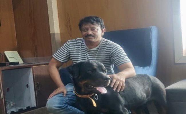 Ram Gopal Varma New Pet Dog Body Guards For Fans - Sakshi