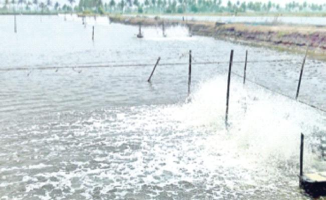 Corona Virus Effect On Aqua Exports - Sakshi