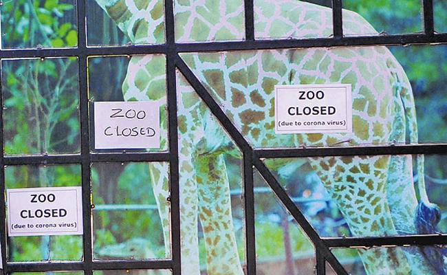 Coronavirus: Closure of zoos and tourist centers - Sakshi