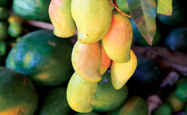 Mango Fruits Sales Starts Before Summer in West Godavari - Sakshi