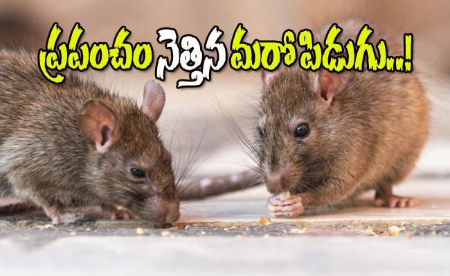 Amid Coronavirus Threats Named Hantavirus Comes To Light - Sakshi