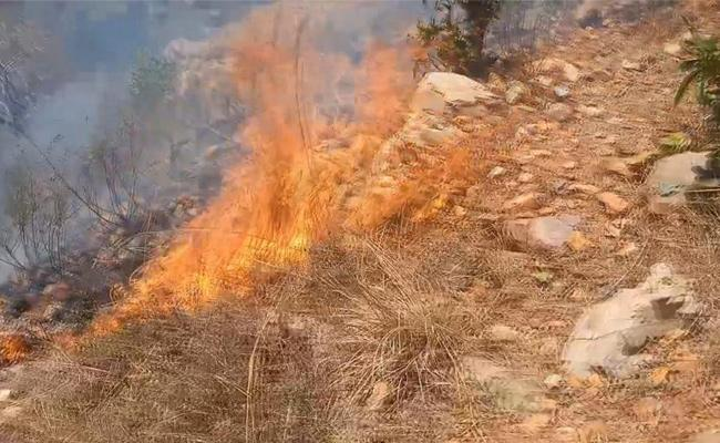 Fire Accident In Seshachalam Forest In Tirumala - Sakshi