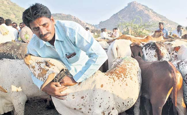 Livestock Farming Income Is Higher Than Agriculture - Sakshi
