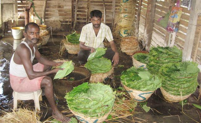 Betel Farmers Loss With Lockdown West Godavari - Sakshi