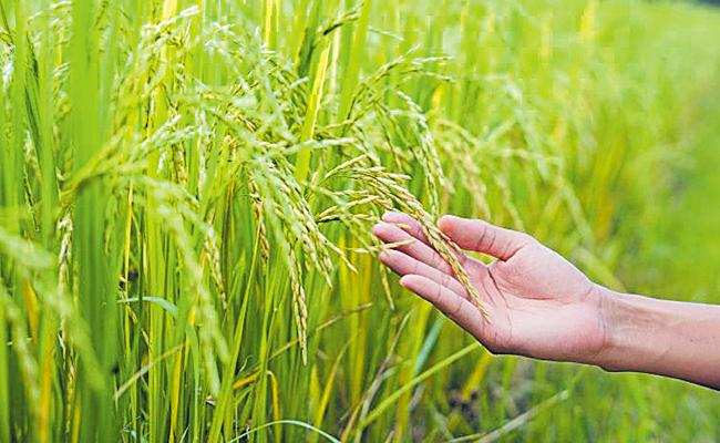 Above One And Half Crore Tonnes of Foodgrains production In Telangana - Sakshi