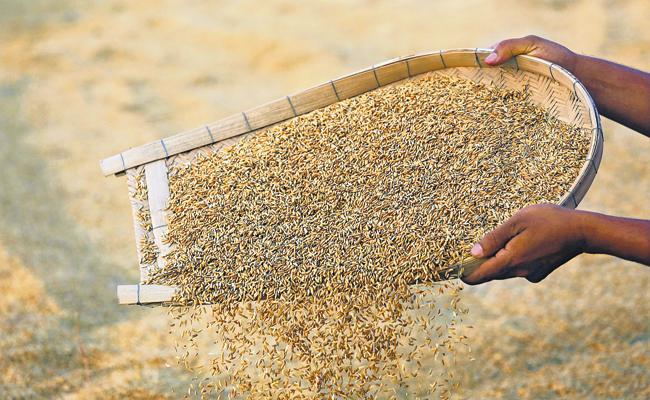 Grain collection With Electronic Crop Registration  - Sakshi