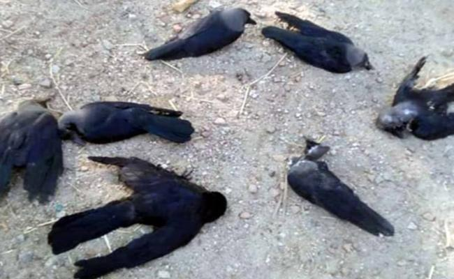 Crows And Birds Hungry Deaths in Tamil Nadu - Sakshi