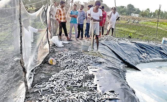 Poison Experiment on Fish Pond in Medak - Sakshi