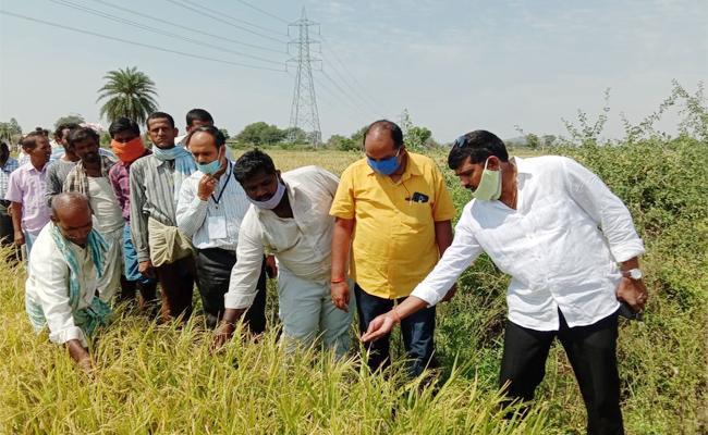 Agriculture Officers Visit Rainy Crops in Mahabubnagar - Sakshi
