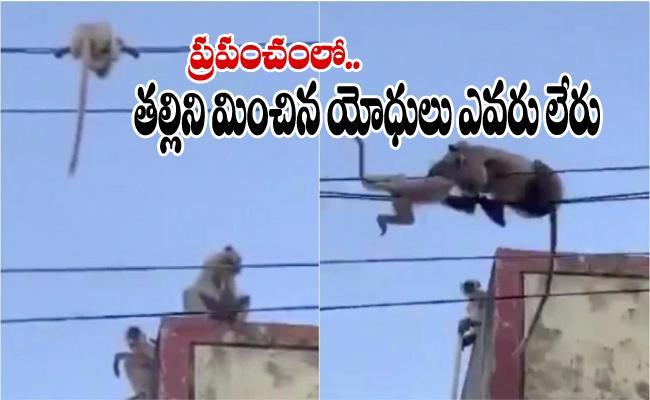 Mother Langur Saving Her Child From Falling Video Viral - Sakshi