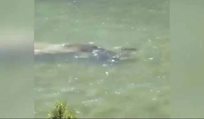 IFS Officer Susanta Nanda Tweet Moose Swimming Video - Sakshi