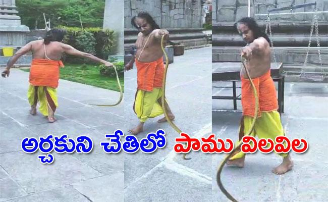 Priest Of Varaha Lakshmi Narasimha Swamy Holding The Snake In Temple - Sakshi