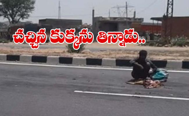 Heart Breaking: Hungry Man Eat Dead Dog On Highway In Rajasthan - Sakshi